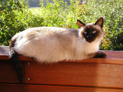 Lissy, trächtige Mutter aus 2006 !