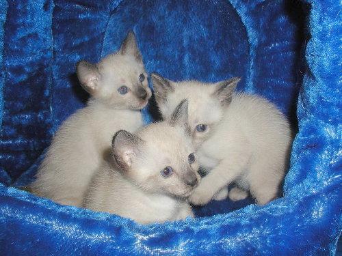 Sallys Babys in der 4. Woche.