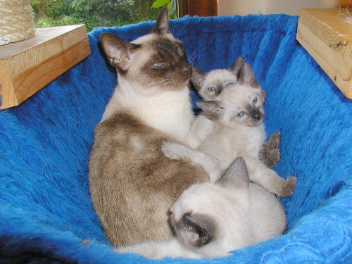 Sallys Babys in der 6. Woche.