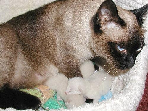 Baghis Babys kurz nach der Geburt.