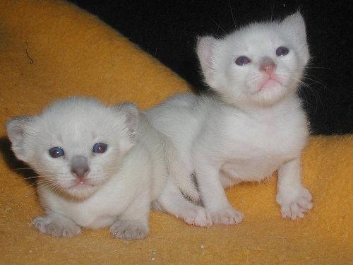 Benjis Babys in der 3. Woche.