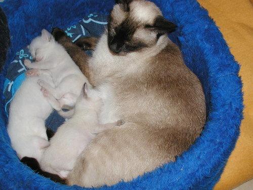 Benjis Babys in der 4. Woche.