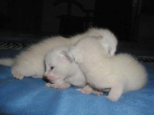 Sallys Babys in der 2. Woche.