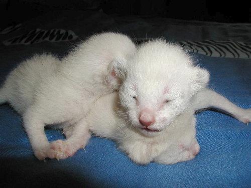 Sallys Babys in der 1. Woche.