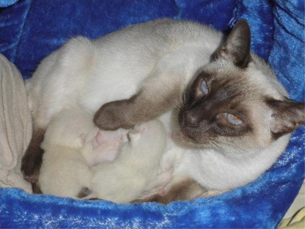 Sallys Babys kurz nach der Geburt.