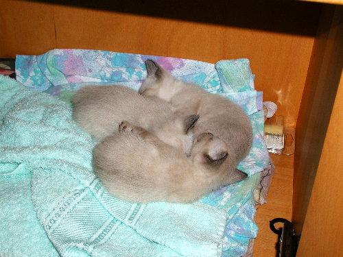Sally's Babys in der 4. Woche!