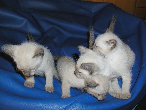 Sally's Babys mit 4. Wochen!