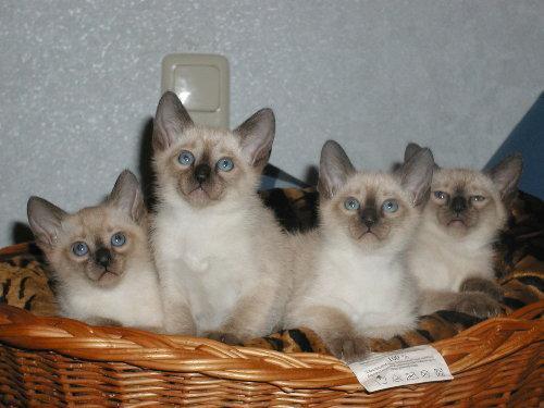 Sally's Babys mit 6. Wochen!