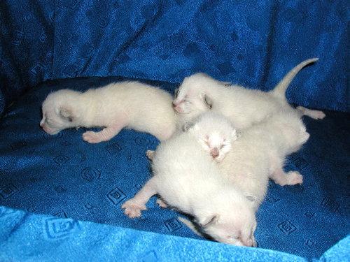 Benji's Babys in der 1. Woche!