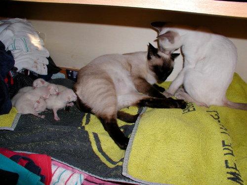 Benji nach der Geburt ihrer Babys!