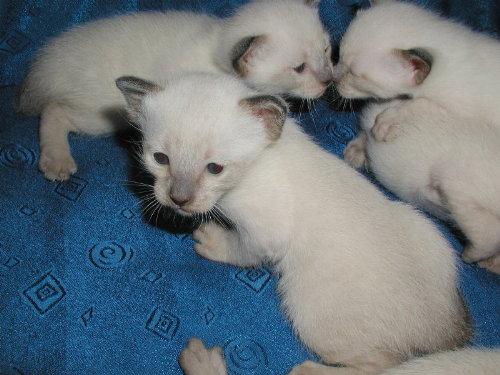 Benji's Babys in der 3. Woche!