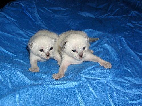 Lizzy's Babys in der dritten Woche !