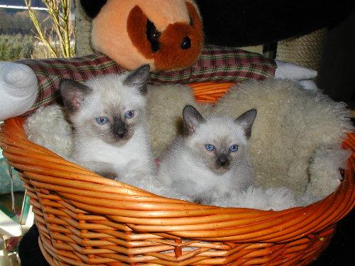 Lizzy's Babys in der fünften Woche !