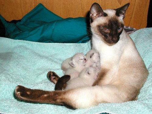 Sally's Babys in der 1. Woche !
