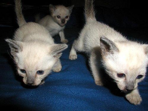 Sally's Babys in der 3. Woche !
