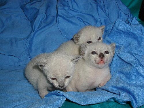 Sally's Babys in der 2. Woche !