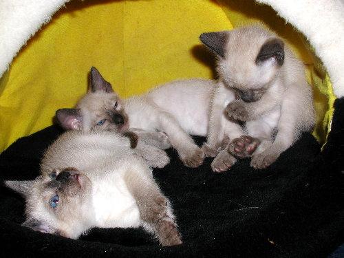 Sally's Babys in der 6. Woche !