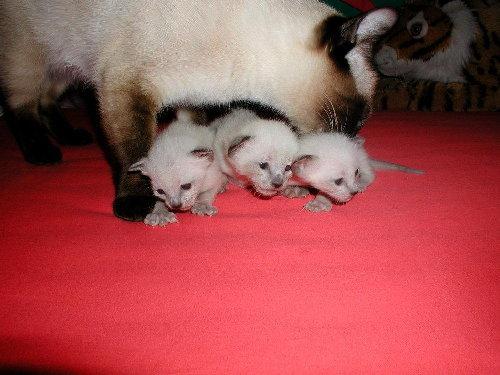 Benjis Babys in der 3. Woche !