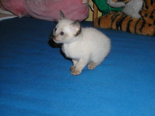 Benjis Baby