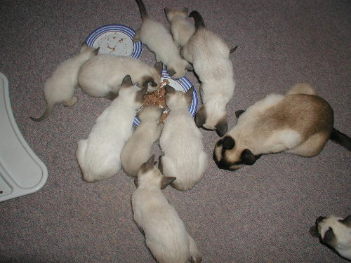 Benji's Babys in der 4. Woche
