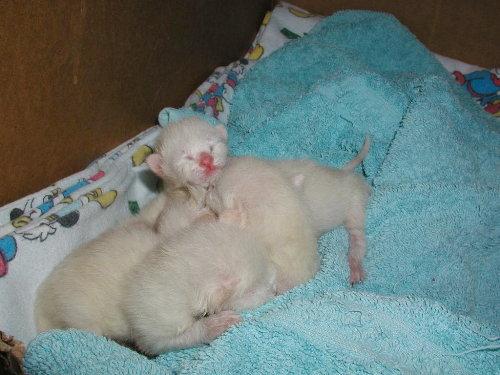 Benji's Babys nach der Geburt.