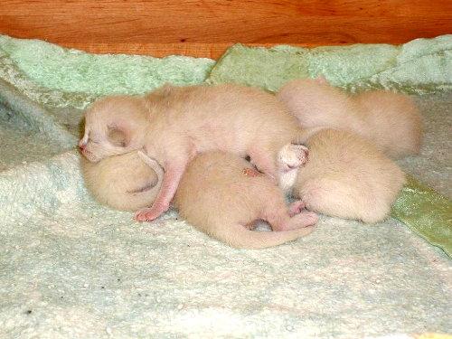 Lizzy's Babys in der 1. Woche.