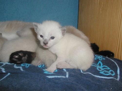 Lizzy's Babys in der 3. Woche.