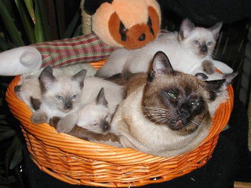 Lizzy's Babys in der 8. Woche.