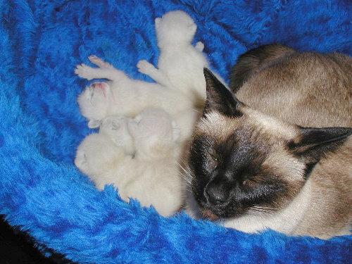 Benji's Babys in der 2. Woche.