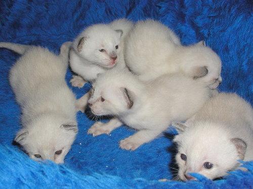 Benji's Babys in der 3. Woche.