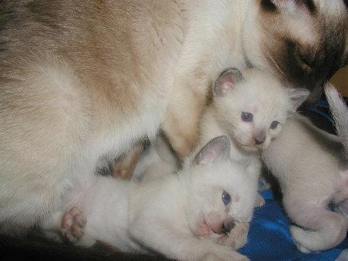 Sally's Babys in der 3. Woche