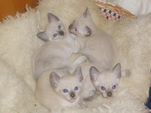 Sally's Babys in der 5. Woche