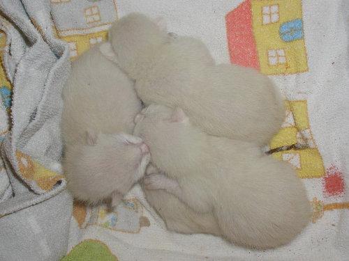 Benjis Babys nach der Geburt.