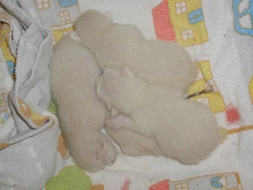 Benji's Babys am ersten Tag.