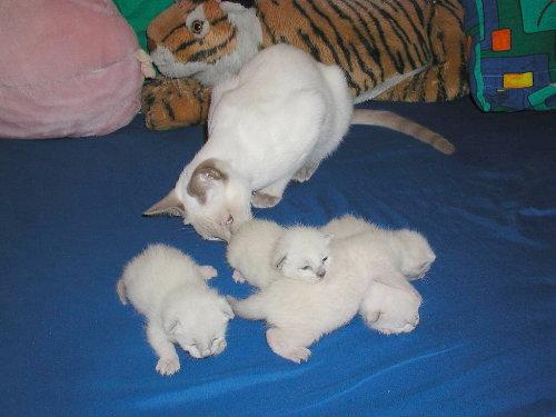 Benji's Babys in der 1. Woche