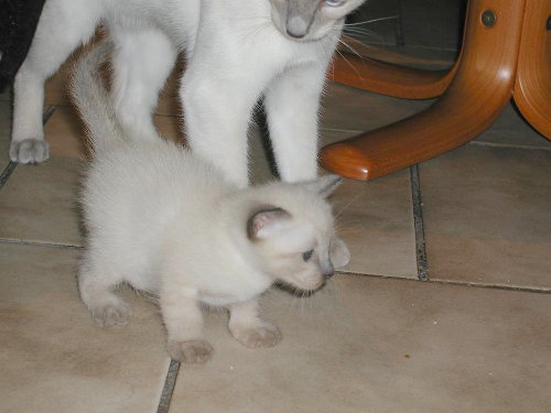 Benji's Babys in der 3. Woche
