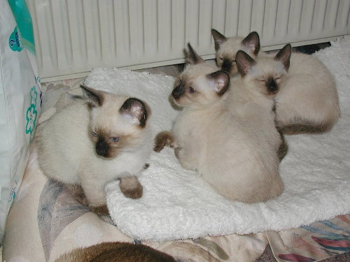 Benji's Babys in der 8. Woche