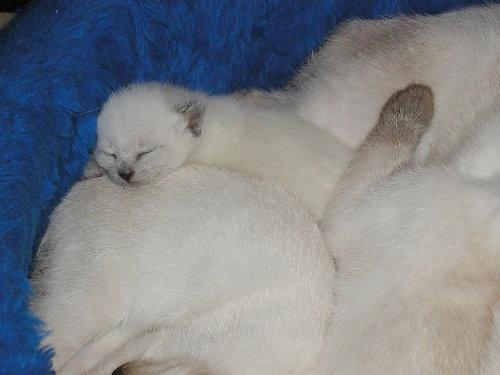 Lissy's Baby in der 3. Woche
