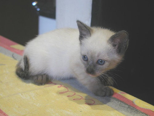 Lissy's Baby in der 6. Woche