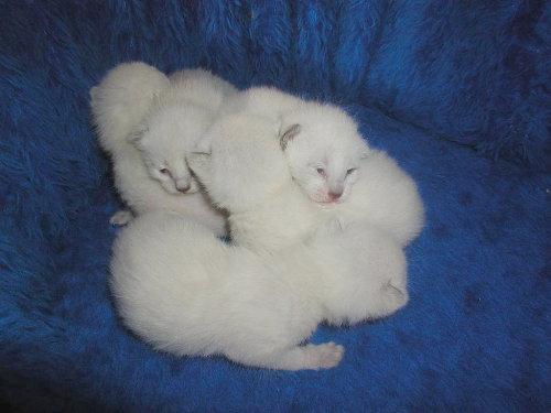Baghi's Babys in der 2. Woche.