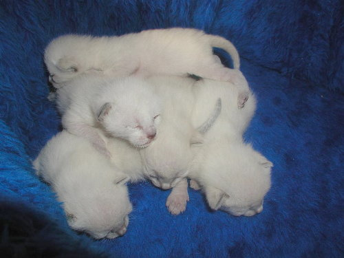 Baghi's Babys in der 1. Woche.