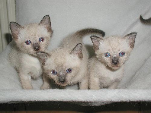 Baghi's Babys in der 4. Woche.