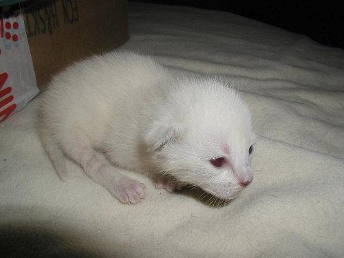 Benji's Baby am 3. Tag.