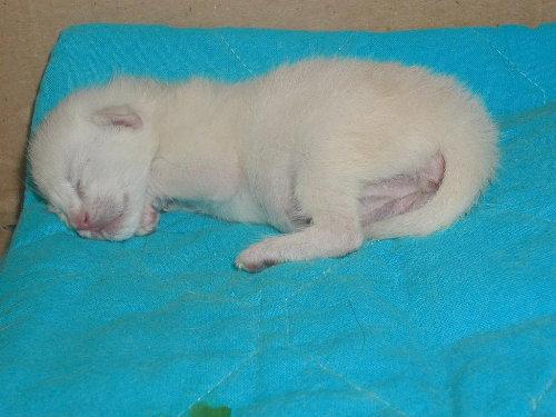 Benji's Baby nach der Geburt.