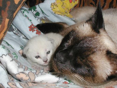 Benjis Baby in der 2. Woche