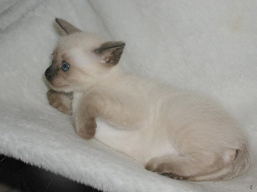 Benjis Baby in der 5. Woche