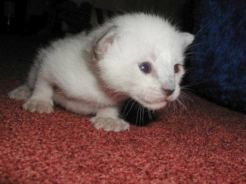 Benjis Babys 2 Wochen alt.