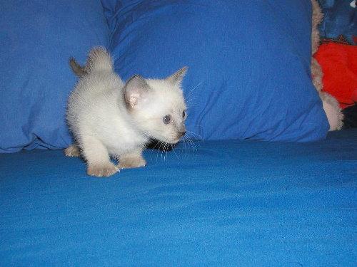Benjis Babys 5 Wochen alt.