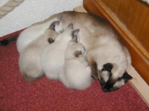 Benjis Babys 6 Wochen alt.