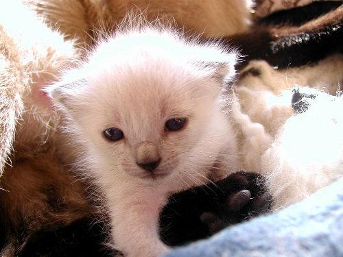 Baghis Baby 3 Wochen alt.